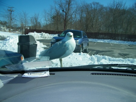 seagull-gets-closer